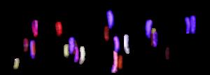 arrière plan de l'animation des plumes