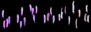 avant plan de l'animation des plumes